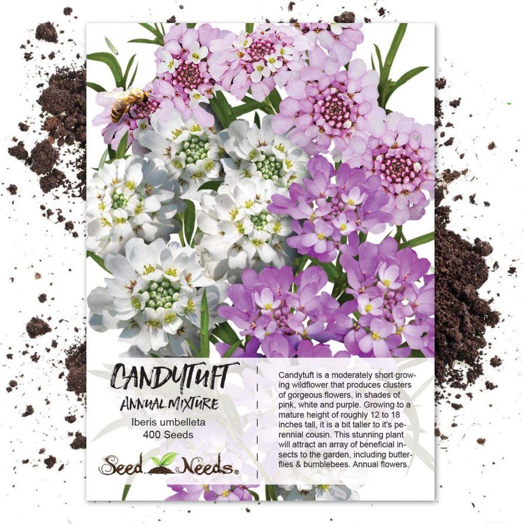 Candytuft Seeds